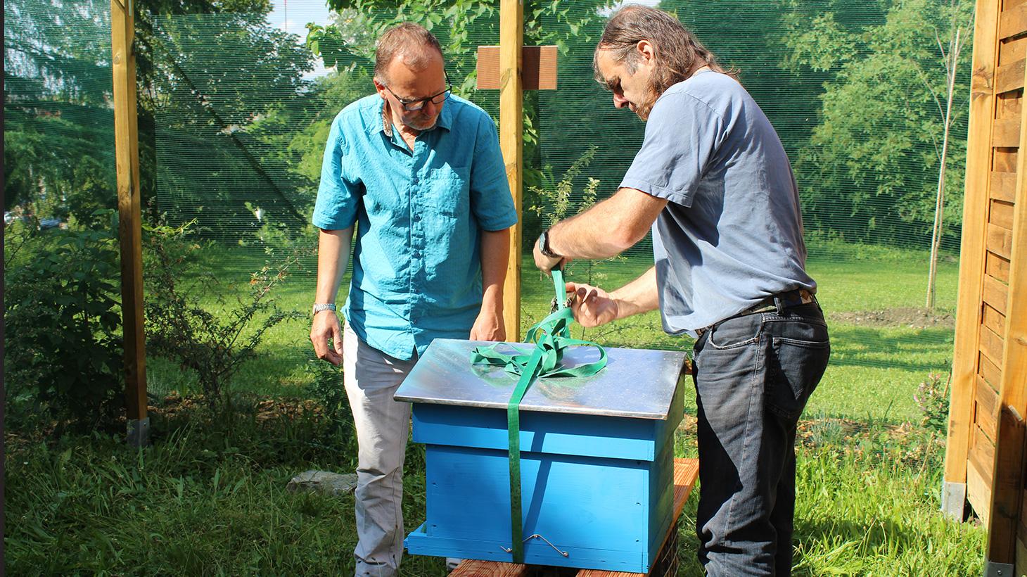 Installation des ruches par Serge Krivobok et Patrick Marcireau